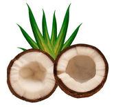 Kokos na białym tle — Zdjęcie stockowe