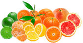 Citrus fruits isolated on white background — Stock Photo