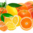 Citrus fruits — Stockfoto #9413312