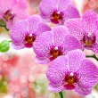 Orchid flower - Foto Stock
