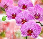 Orchid flower — Стоковое фото