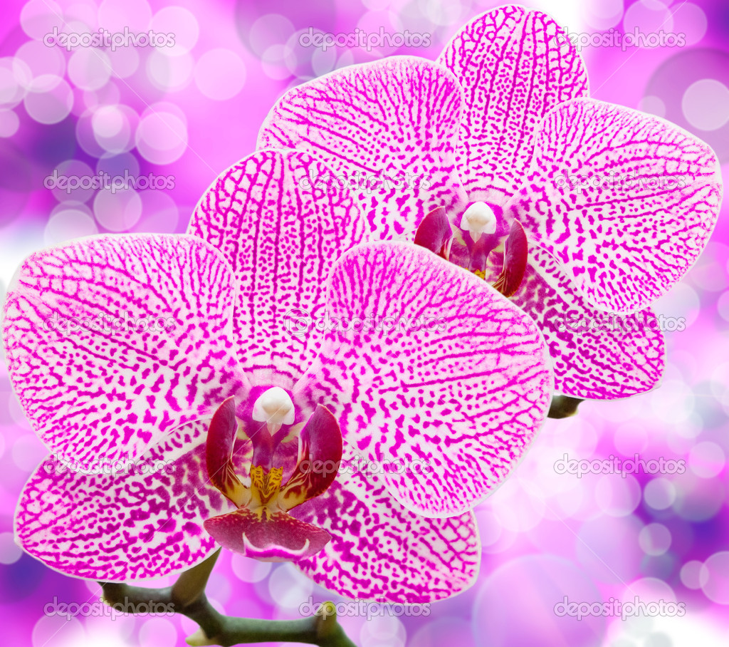 Close up of orchid flower — Stock Photo #9538378