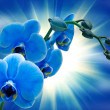 Orchid flower - Stock Photo