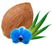 ココナッツ — ストック写真