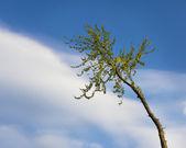 árvores cortadas — Foto Stock