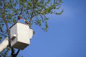 Enlèvement des arbres — Photo