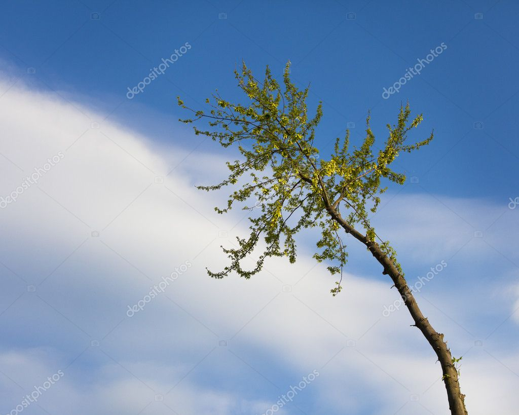 Tree branch still standing during tree removal  Stock Photo #10146617