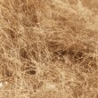 Dirt Fuzz and Hair - Stockfoto