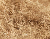 Dirt Fuzz and Hair — Stock Photo