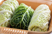 Stuffed Cabbage Leaves — Stock Photo