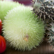 Spiky Cucumber — Stock Photo