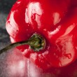 Stock Photo: Scotch Bonnet