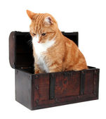 Pet in treasure chest — Stock Photo