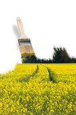 Pincel pintura um campo amarelo — Fotografia Stock