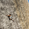 Female rock climber struggles to the summit. - Stock Photo
