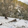 Snow in Majorca - Foto Stock