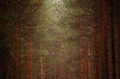 Mglisty las. — Zdjęcie stockowe
