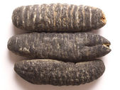 Dried sea cucumber — Stok fotoğraf