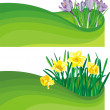 Blooming daffodil and crocus - the beginning of spring — Stock Vector