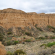 Charyn canyon in spring — Stock Photo