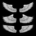 angelo bianco Ali insieme isolato su nero — Vettoriale Stock  #9228490