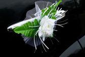 Voiture de mariage décorée de fleurs — Photo