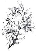 Ramo di un fiore di un lilybranch di un fiore di un giglio — Foto Stock