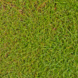 Green grass background — Foto de Stock
