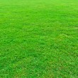 Green grass field — Foto de Stock