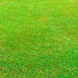 Wet green grass field — Foto de Stock