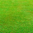 Wet green grass field vertical — Foto de Stock