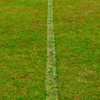 Royalty-Free Stock Photo: Green grass field with line