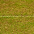 Green grass field with line — Stok fotoğraf