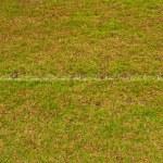 campo de hierba verde con línea — Foto de Stock