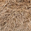 Stock Photo: Pile of straw