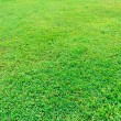 Green grass field — Stockfoto