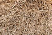 Pile of straw — Stock Photo