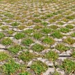Stock Photo: Flagstones with green grasses patern