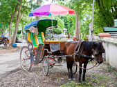 Horse carriage in Thailand — Stock Photo