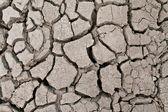 Arid ground land surface — Stock Photo