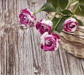 Mini roses — Stock Photo