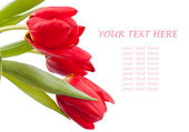 Bouquet of red spring tulips — Stock Photo