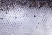 Atlantic salmon scales — Stock Photo