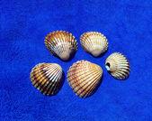 Image of seashells — Stock Photo