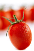 Cherry tomato on white, with tomatoes on background, little sha — Stock Photo