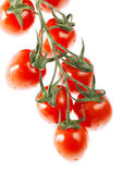 Bunch of cherry tomato over white — Stock Photo