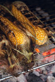 Bbq sweetcorn with leaves, — Stock Photo