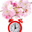 Arrival of spring concept: clock and sakura flowers — Zdjęcie stockowe