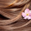 Stock Photo: Beautiful healthy shiny hair texture with flower, hair care co