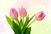 Beautiful tulips over bright spring background — Stock Photo